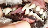 ZubniKamenac